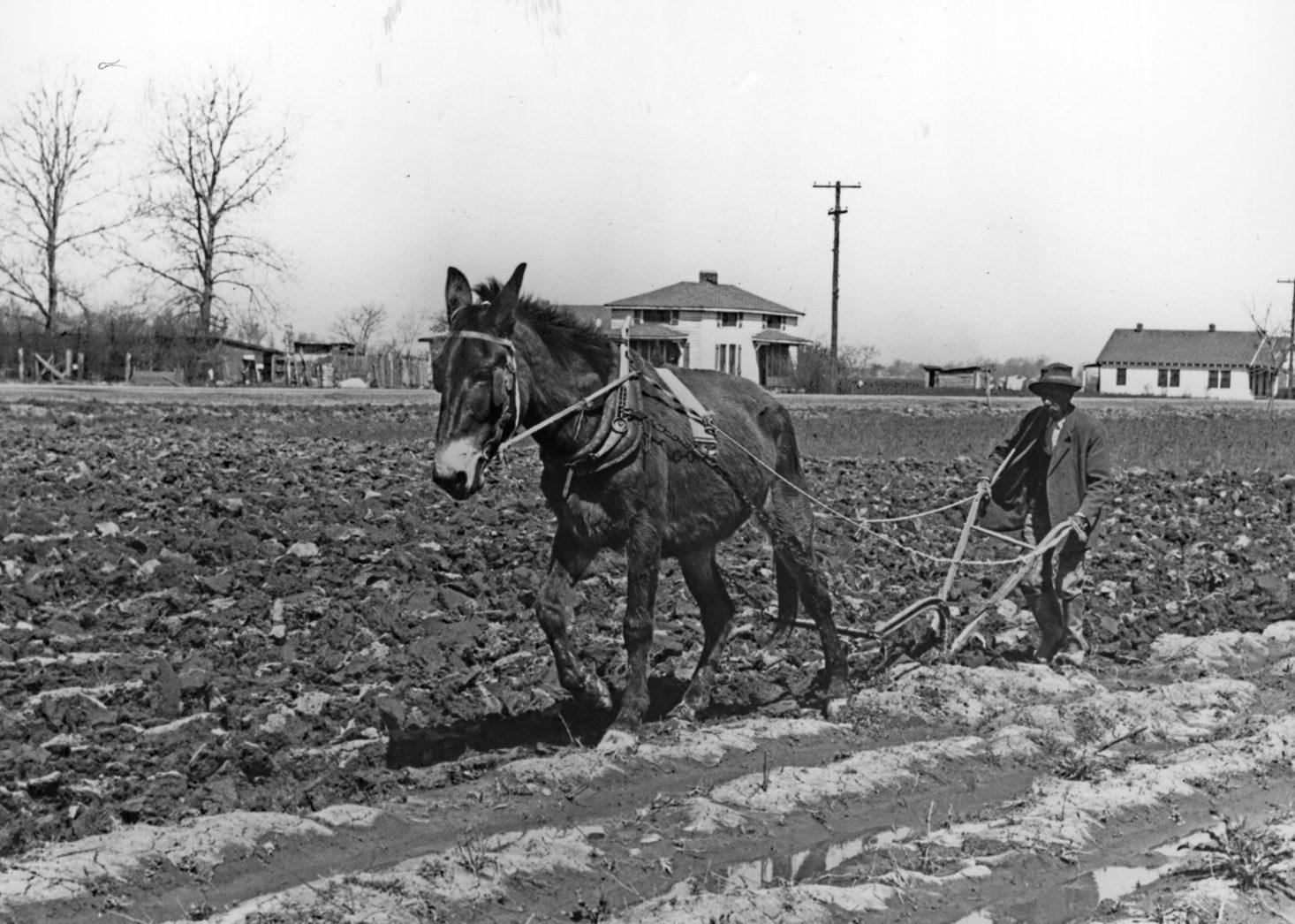 Man_plowing_mule